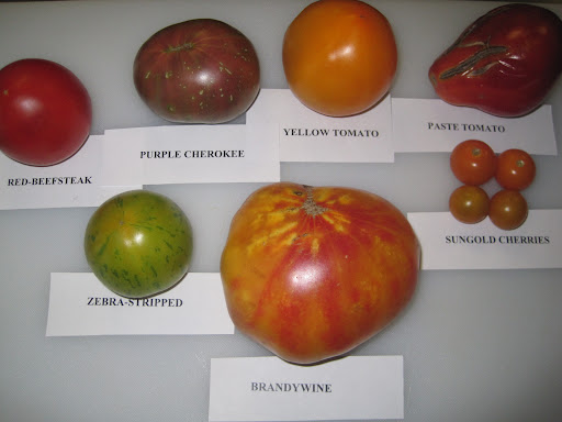 6 heirlooms and 1 favorite cultivated-a Jersey beefsteak.