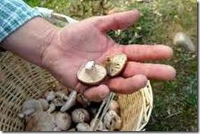 Se realizará el curso de producción de hongos comestibles