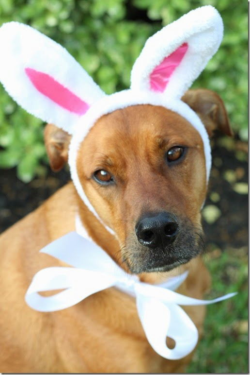 DIY Dog Easter Costume Photography