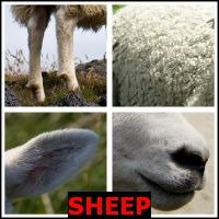 SHEEP- Whats The Word Answers