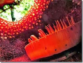 Rafflesia Inside