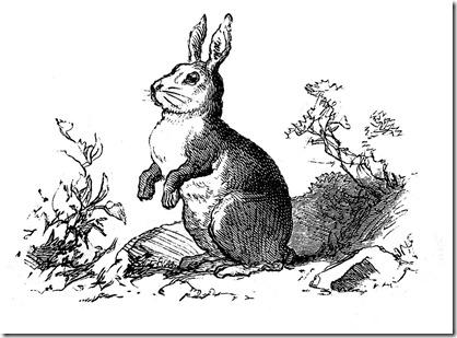 bunny vintage image graphicsfairy003b