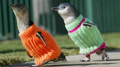 penguin_sweaters
