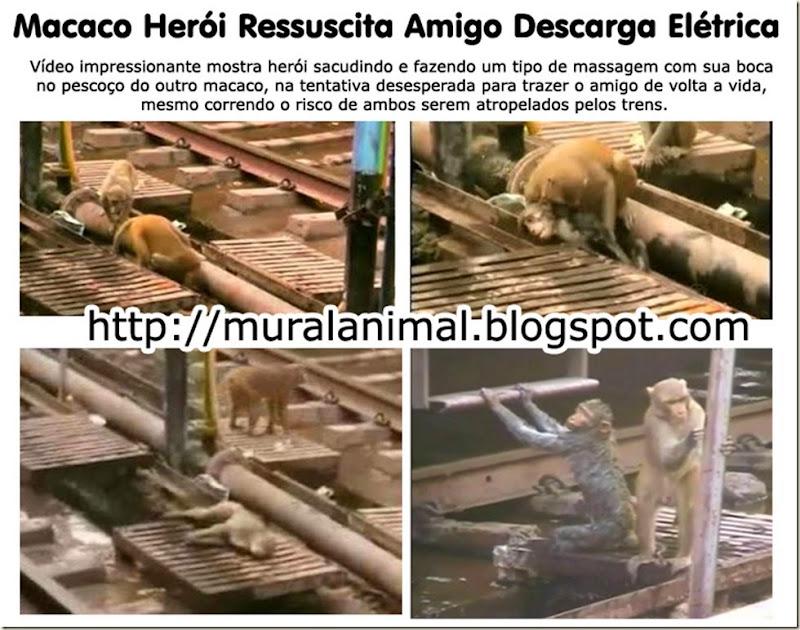 macaco_heroi