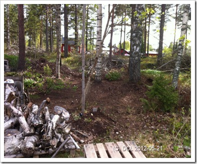 Woodlandplanting1