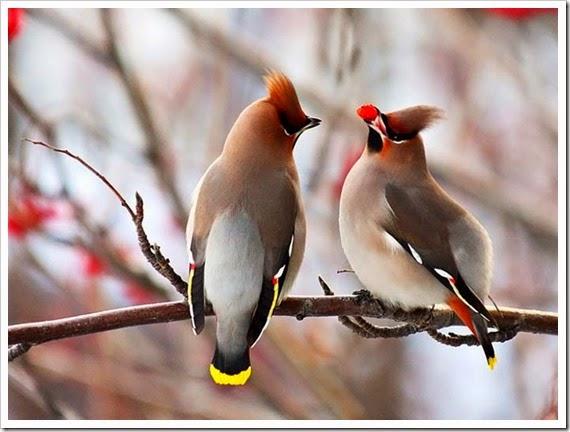pássaros2