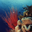 Great Barrier Reef Sponge Coral.jpg