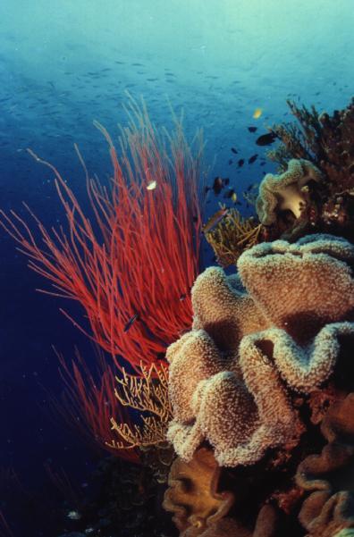 Great Barrier Reef Sponge Coral.jpg