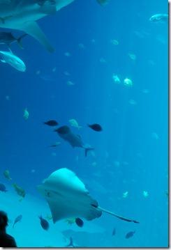 ATL aquarium 052