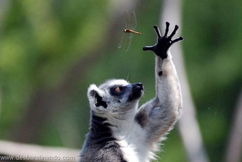 fotos de animais na hora certa desbaratinando  (30)