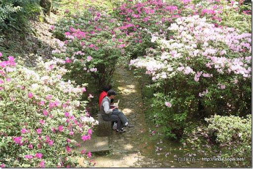 2010陽明山花季-悠閒用餐