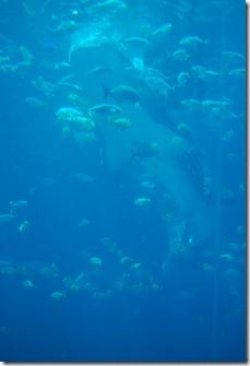 ATL aquarium 065
