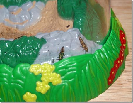 Ladybugs 1