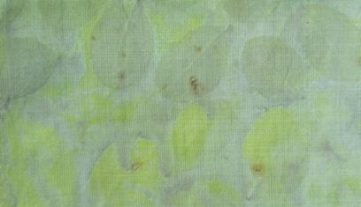 ECO PRINT Perückenstrauch Blätter auf Wolle