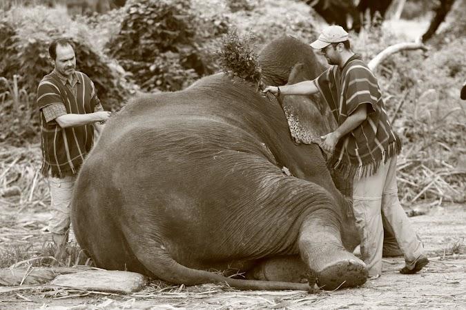 Imagini Thailanda: curatarea de praf a elefantilor, Patara, Thailanda