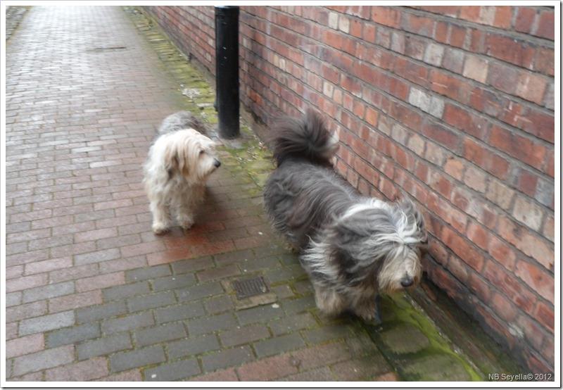 SAM_0195 Meg and Snoopy