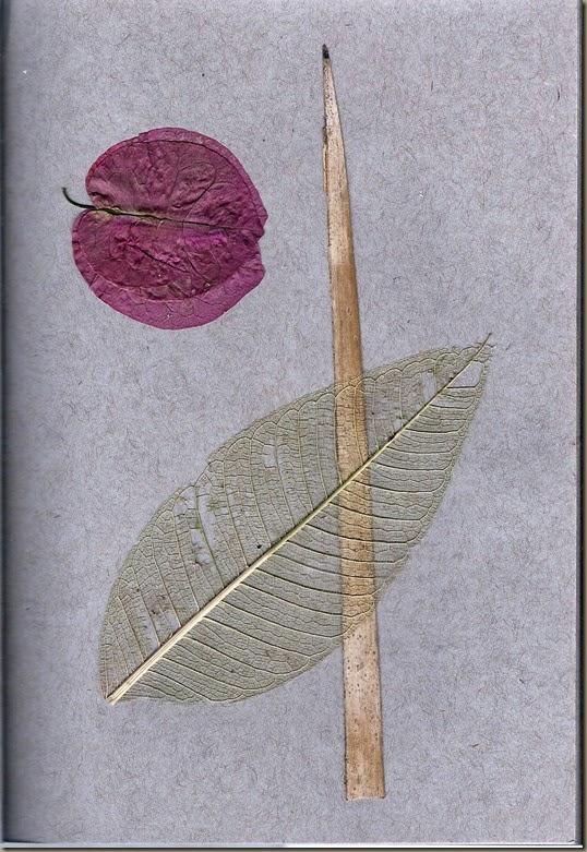 Leaves & Bract