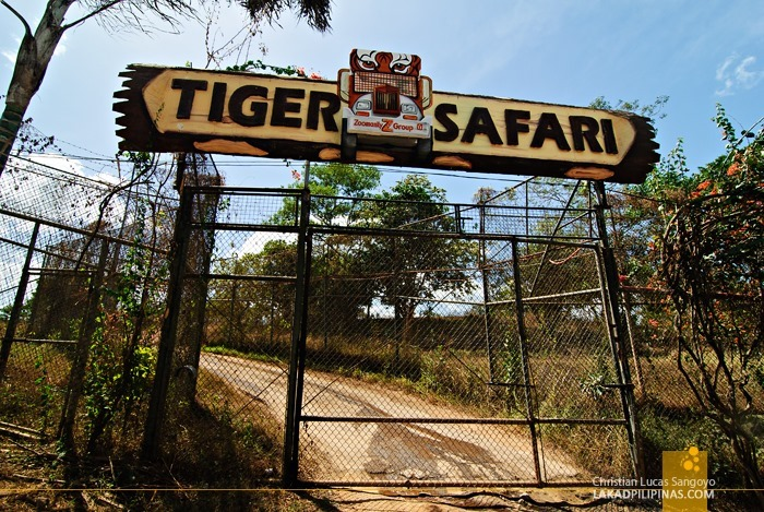 The Tiger Safari at Subic's Zoobic Safari
