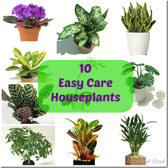 Elegant nest 10 easy care houseplants for Easy care garden shrubs