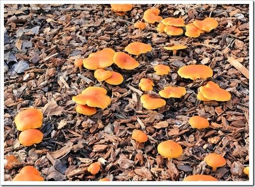 141216_mushrooms_007