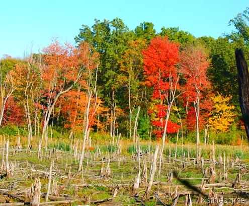 1. Autumn 2010 bog-kab