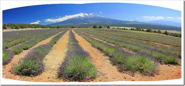 120720_mt_shasta_lavender_farm_pano
