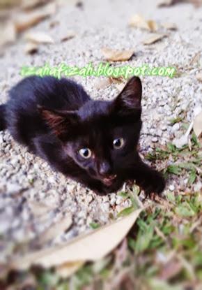 kucingcomel2