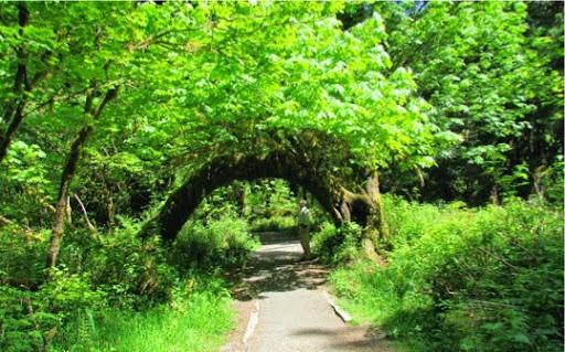VisitingHohRainForest-13-2014-05-21-20-45.jpg