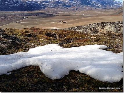 1-burrowing snow_barbderksen