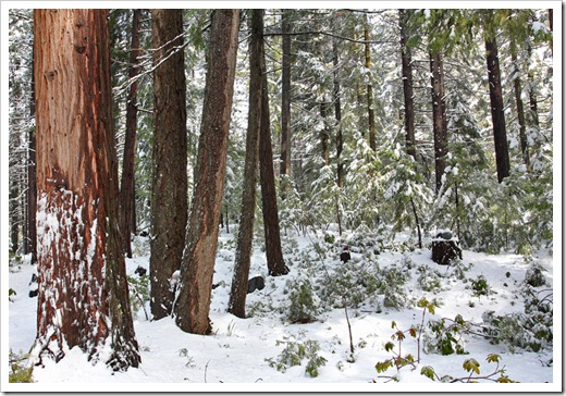 120413_snow11