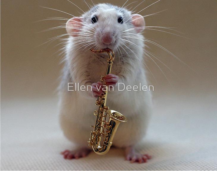 rat-musicians-002
