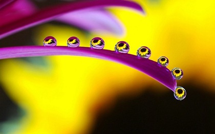 droplets-of-water-on-a-flower-macro-799x500