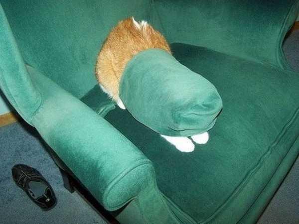 Os gatos não são muito bons em esconde-esconde 7