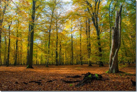 autumn-colors-fall-026