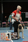 20130510-Bullmastiff-Worldcup-0199.jpg