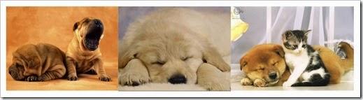 lazy-puppy