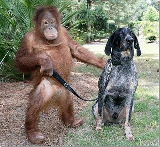 9 Hewan Berbeda Jenis yang Menjadi Sahabat Sejati_orang-utan-dan-anjing