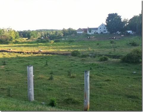 Rhoda-Springs-Farm