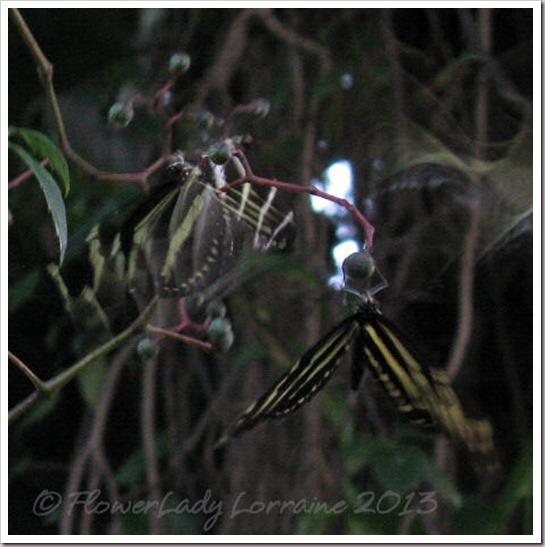 07-23-sleeping-zebras3