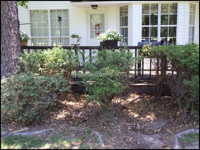 pruning azalea