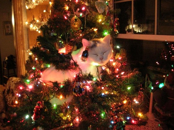 Cats Will Sleep Anywhere 04