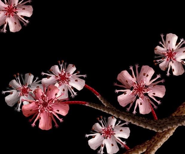 cecelia webber 2