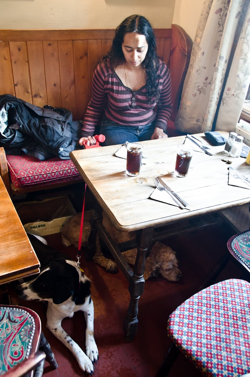 Chewy and Abby at the Peak District pub