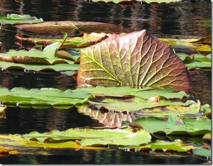 lake_louisa_sp_crooked_river_5