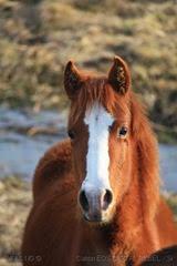 [47]_Cavalo