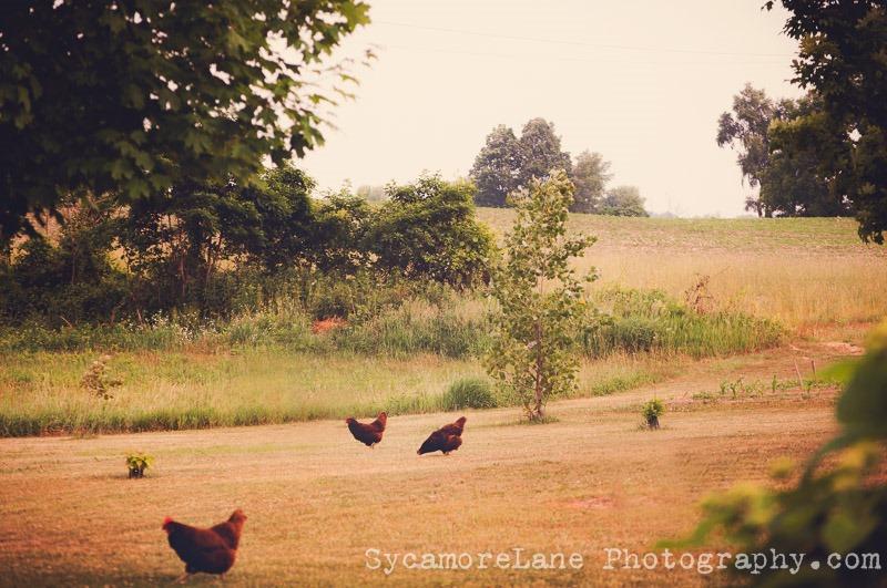 SycamoreLane Photography--garden (2)