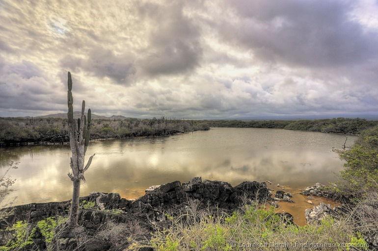 Kaktus vor Lagune, Isabela, Galapagos