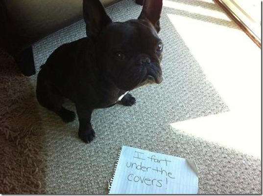 dog-shaming-bad-27