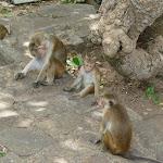 Shri-Lanka (15).jpg