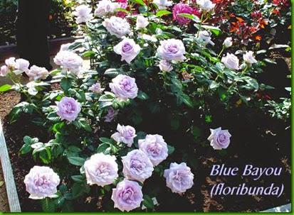 Rosa Blue Bayou